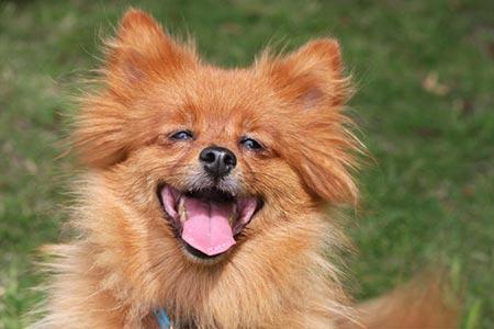 happy-dog-3