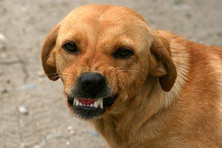 mad-dog-1